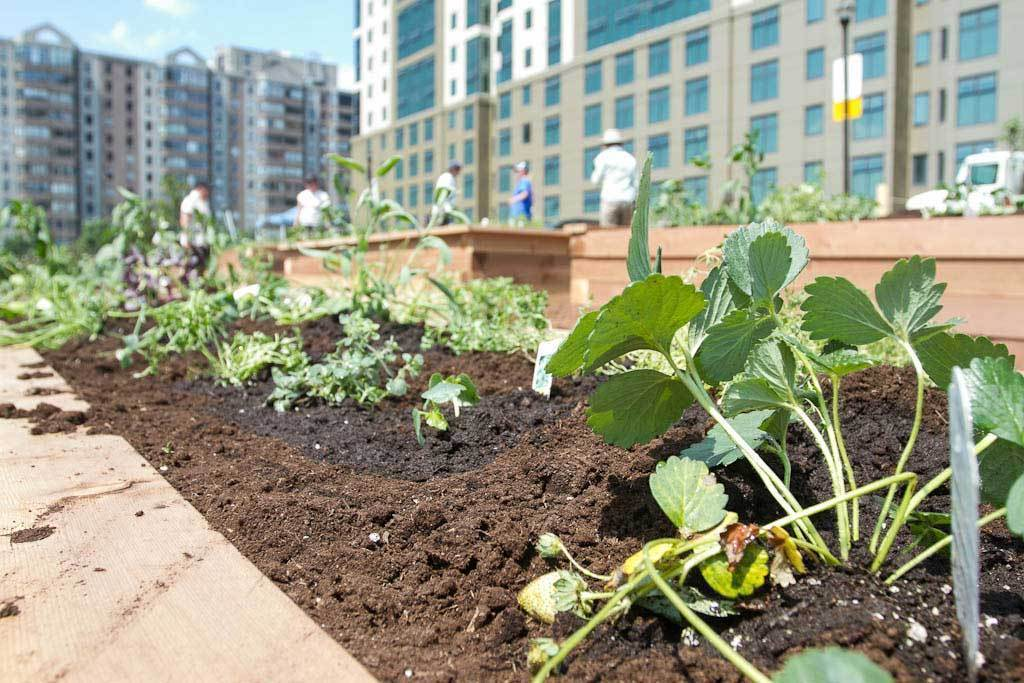 Project Orange Thumb Fiskars Support Community Gardens